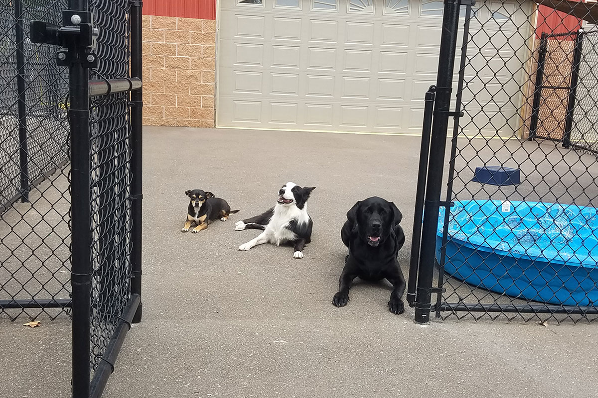 Dogs In Front Of Garage